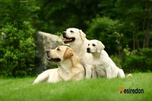 Have Dog, Will Travel! Tips For Travelling With Dogs