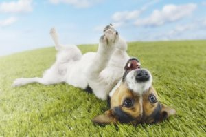 6 Common Dog Conditions and How to Prevent Them