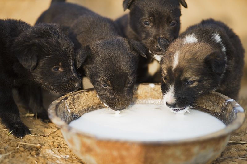 Is Fluoride Too High in Your Pet Food