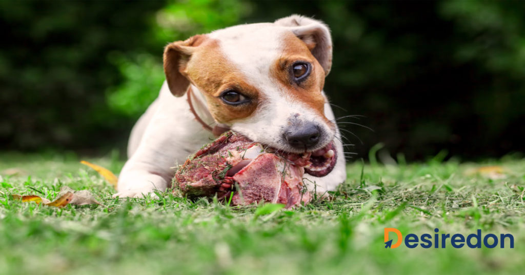 Dogs as an Evolved Form of Opportunistic Carnivore