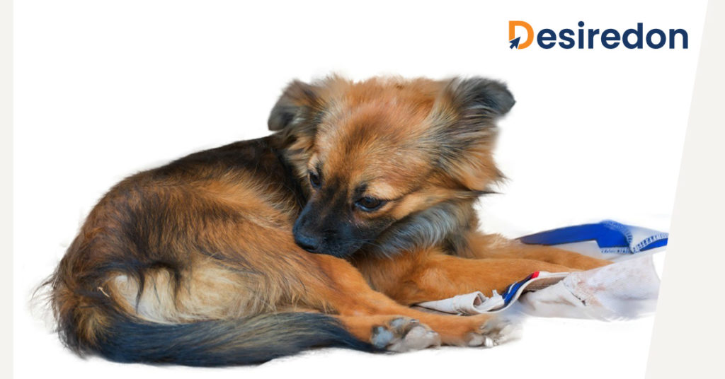 Most Common Dog Skin Problems
