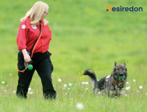 The Wilderness Airscent Search and Rescue Dog
