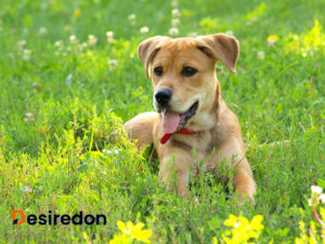 Things to consider before buying or adopting a dog