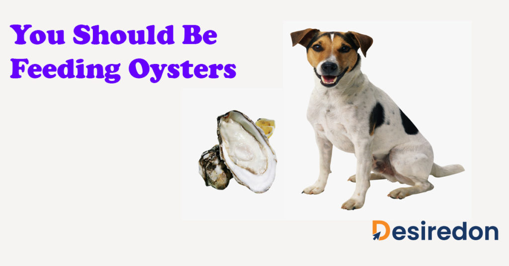 You Should Be Feeding Oysters